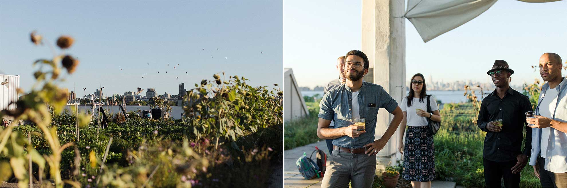 On the left, sunflowers on a rooftop garden. On the right, a group of people gathered on the rooftop with drinks in their hands.