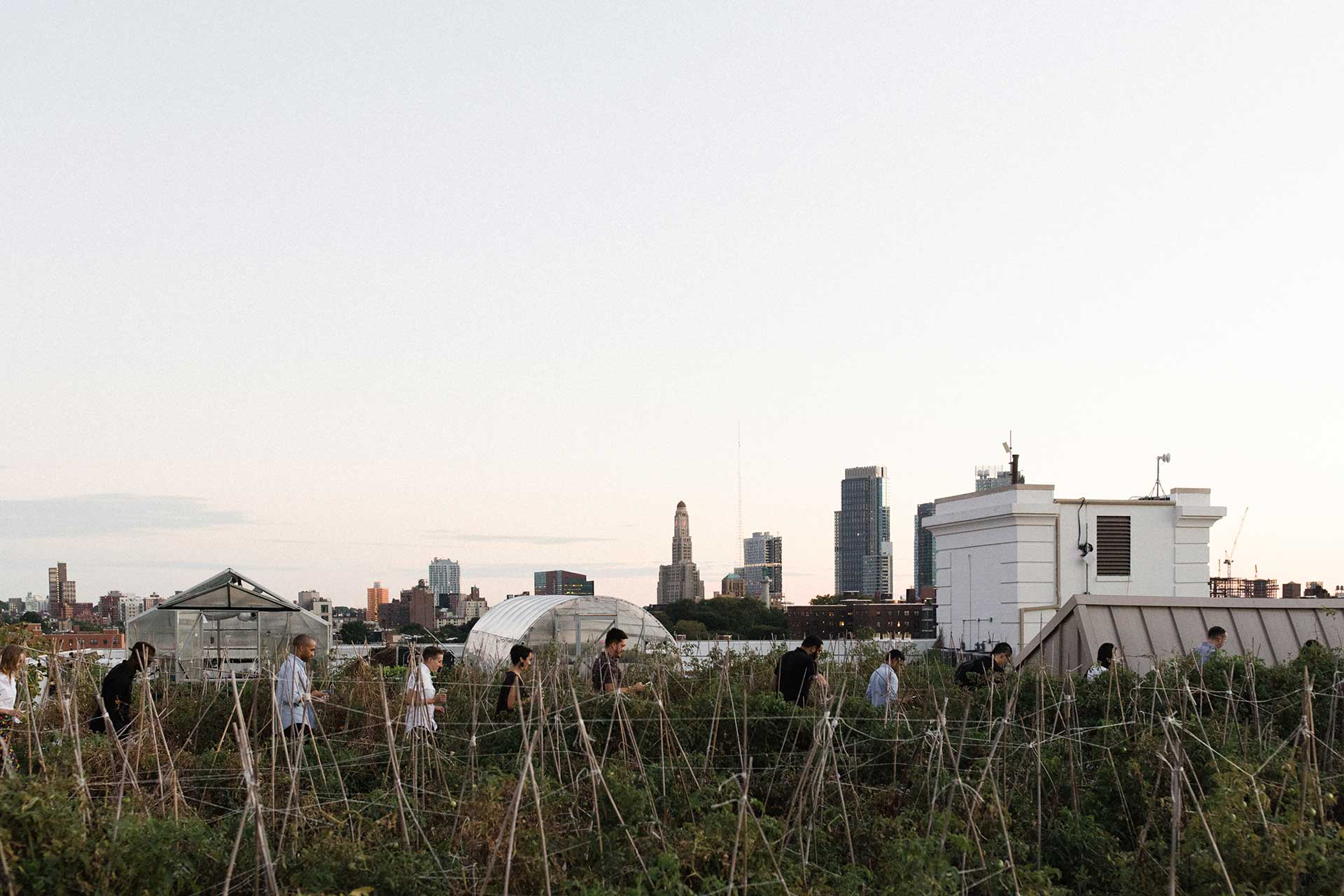 A group of people walk through rows of plants in a rooftop garden.