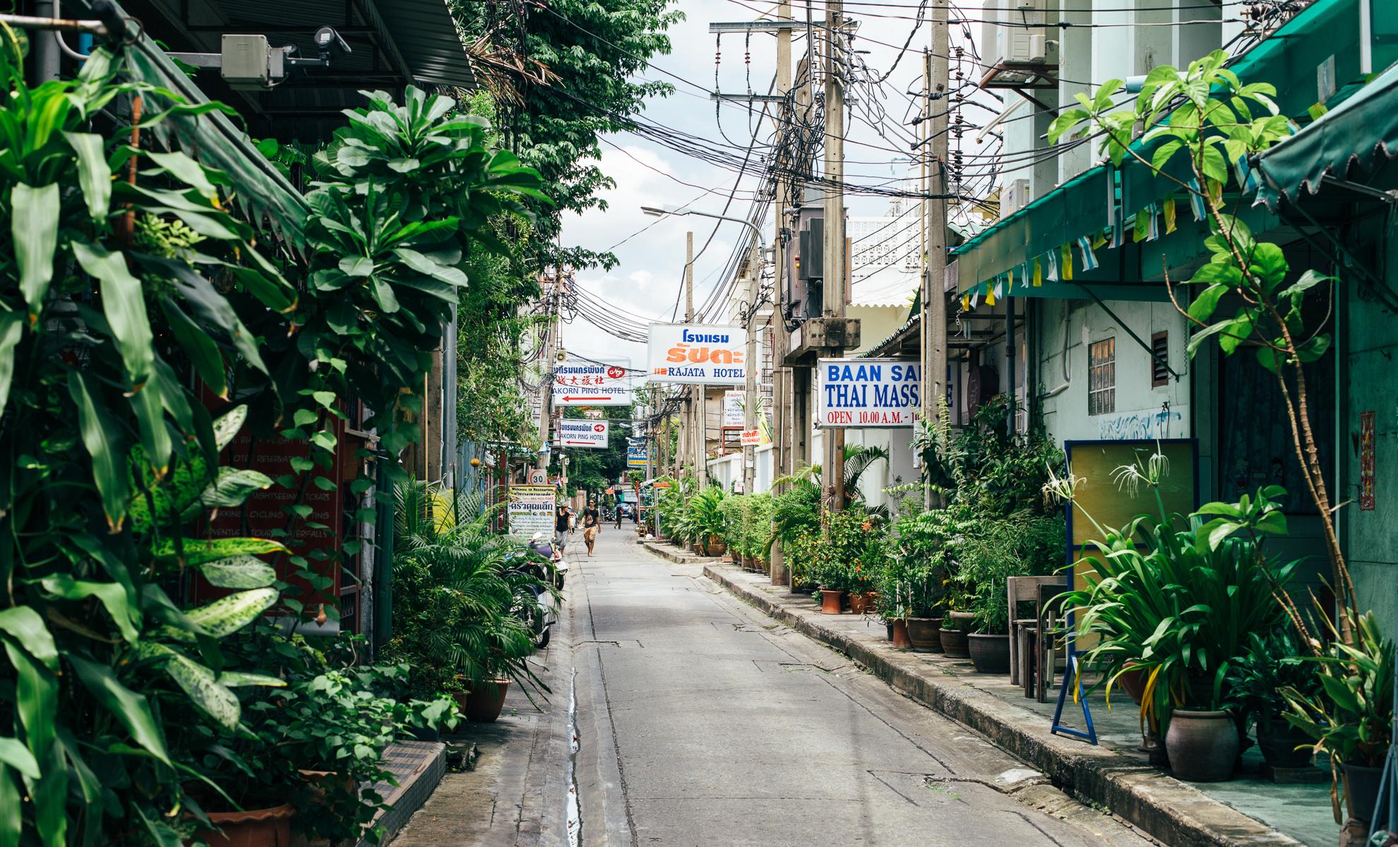 A narrow, tree-lined street