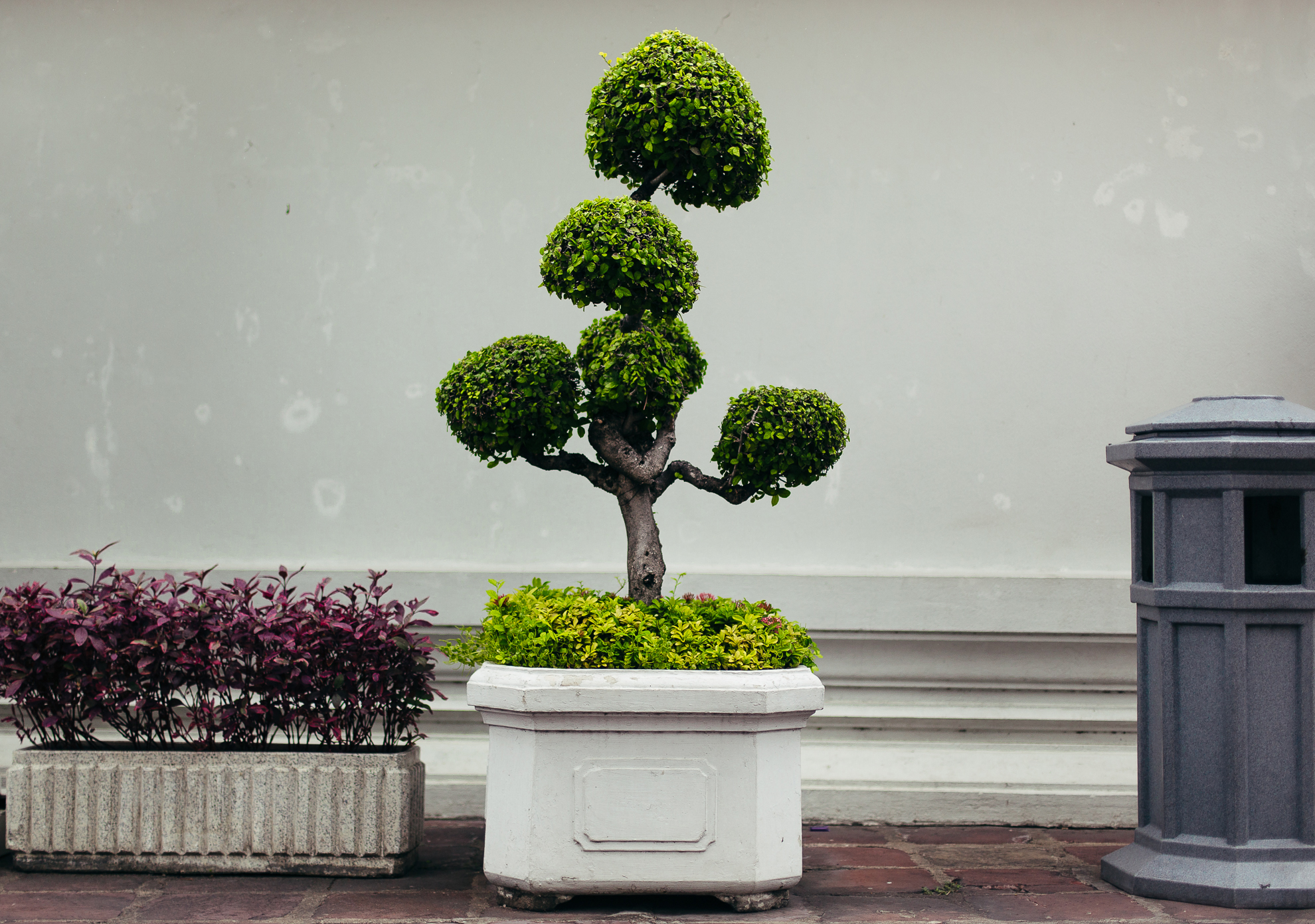 A well manicured tree